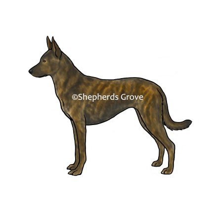 Dutch-Shepherd-Art
