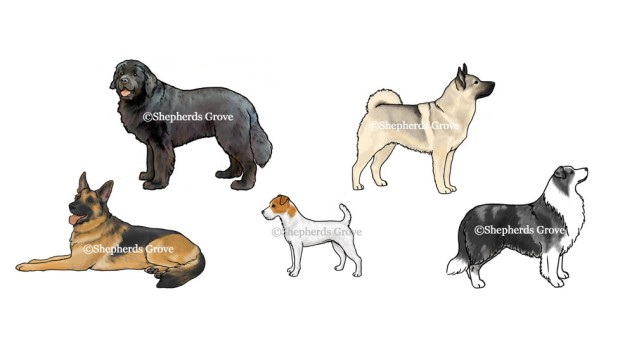 New dog breed artwork  for 2015 - Shepherds Grove.