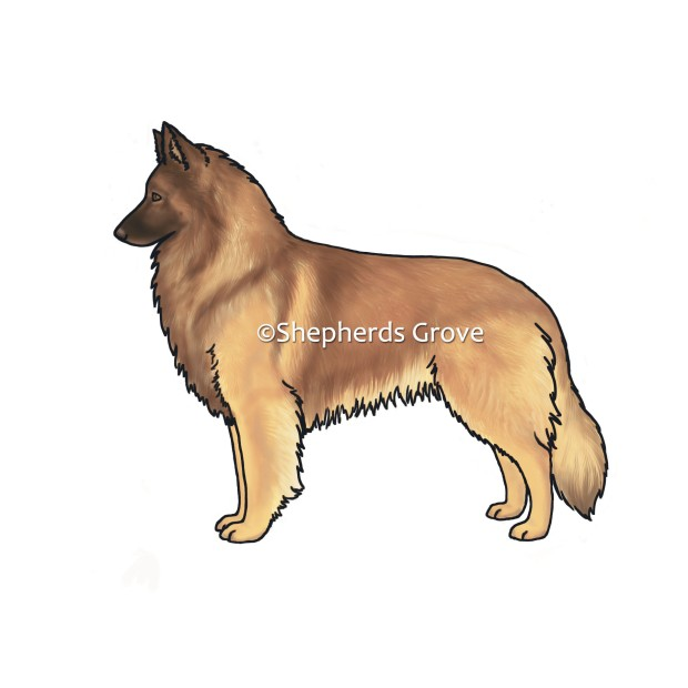 Belgian-Tervuren-Design-shepherds-grove.com