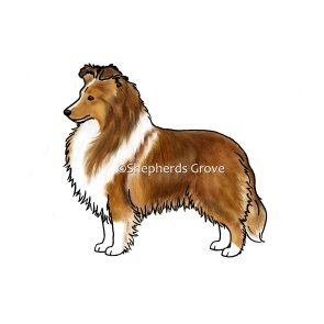 New Sable Sheltie Design - Shepherds Grove