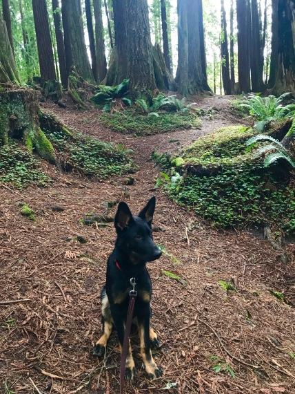 Zeus-Sequoia-Park